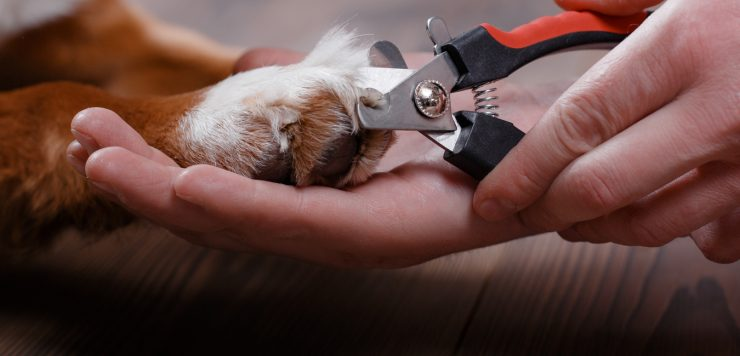 dog nail trimmer
